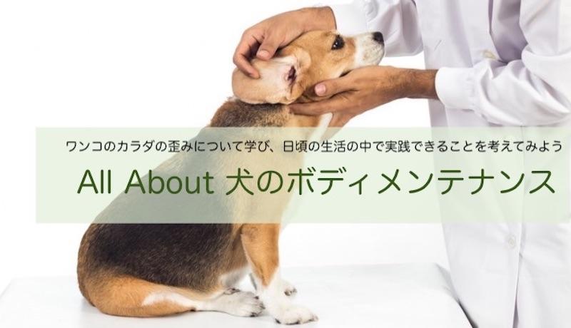 犬の整体セミナー