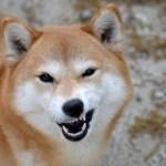 愛犬へのしつけと称した体罰は虐待なのか~SNSや掲示板の様々な意見を紹介