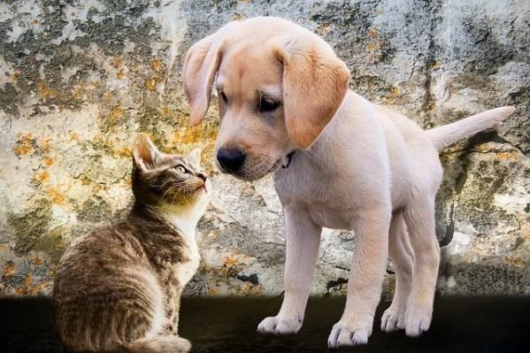 2018年ペット飼育数、戌年でも犬より猫が多くなる