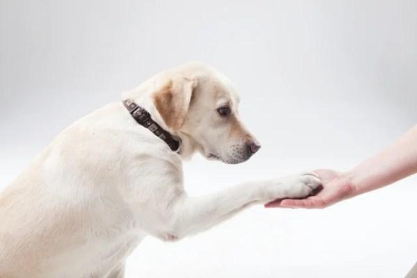 愛犬へしつけやタッチなどの芸のレッスン~どんな犬も簡単にできる上達方法