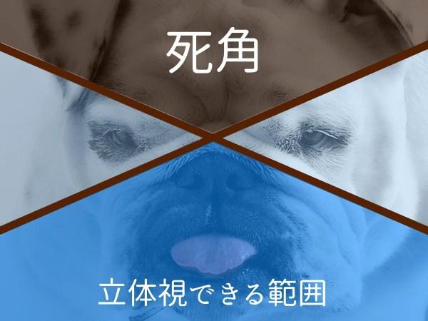 犬の短頭種の視野