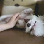 犬の老化現象と老化シグナル~寿命を左右する老化サインの発見法