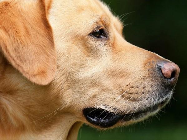 犬のヒゲの秘密について調べてみた