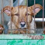2020年、全国の動物愛護センター一覧~殺処分以外の役割や活動【最新版】