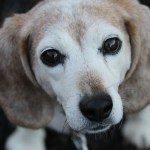 犬の記憶力の秘密~物覚えの能力や頭が良くなる知能玩具口コミレビュー