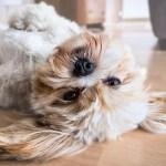 犬の条件付けしつけクリッカートレーニング!初心者でも簡単な3つの方法