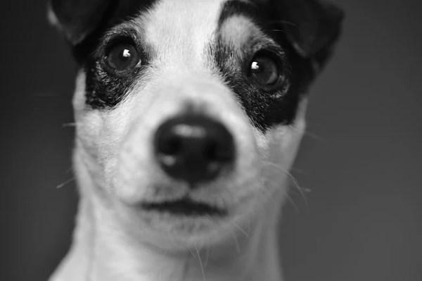 犬も緊張したり怖いと震える