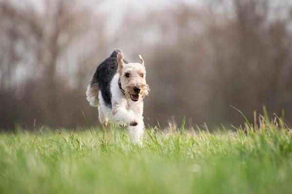 成犬でも効果絶大!3つのことに注意するだけで犬は利口になってくれる