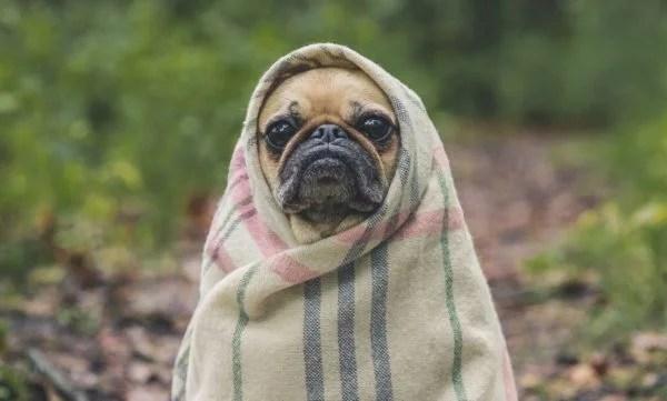 犬種によっては犬も寒さで震える