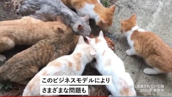 変わる犬や猫との出会い方8
