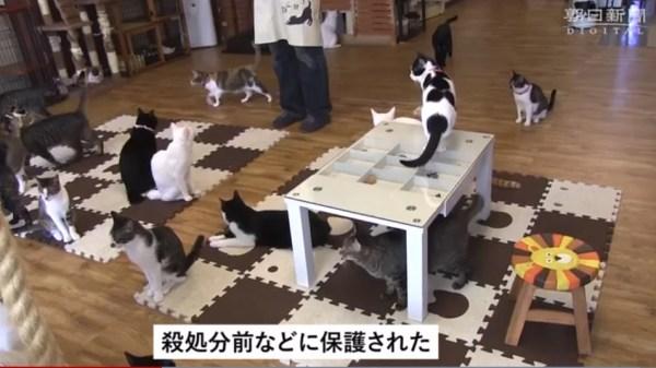 変わる犬や猫との出会い方24