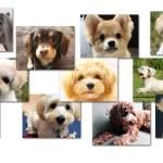 ミックス犬の人気犬種ランキング~インスタ映え検索30選【2019年夏】
