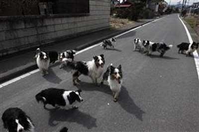 福島の原発近くにいる犬