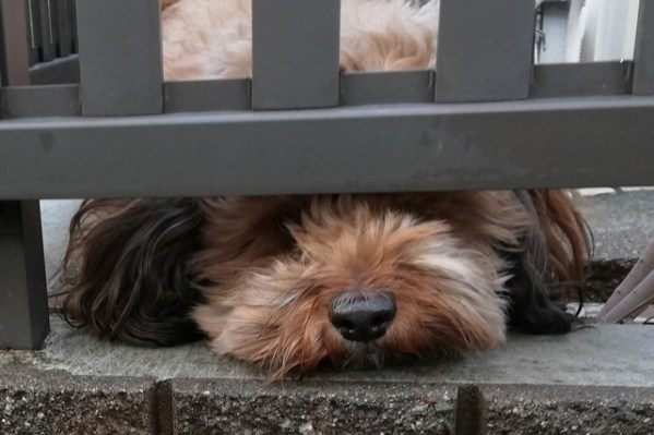 保護犬としてミックス犬を飼うという選択~老犬になった我が家の愛犬の場合