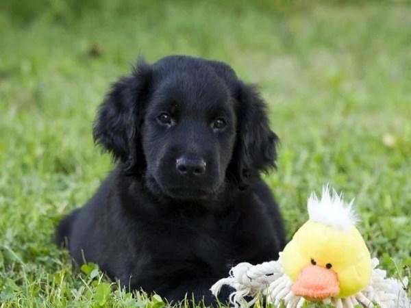 犬の問題行動と解決策~トイレシートを引っ張り出して噛み破る癖との格闘