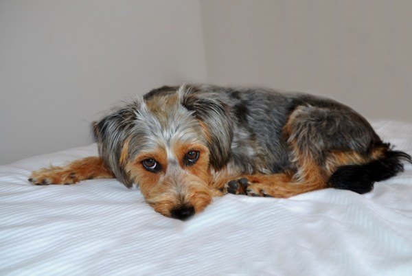 犬の問題行動としつけ~保護犬の執着行動フードアグレッシブを改善する方法