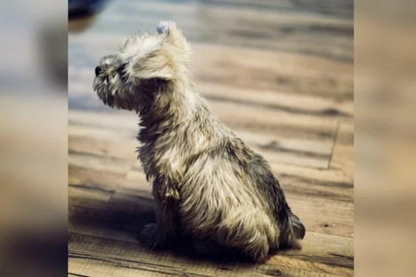 一人暮らしの私がペットとして犬を飼ってみてわかったメリットとデメリット