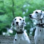 肝臓の数値が高い愛犬におすすめのドッグフードは?