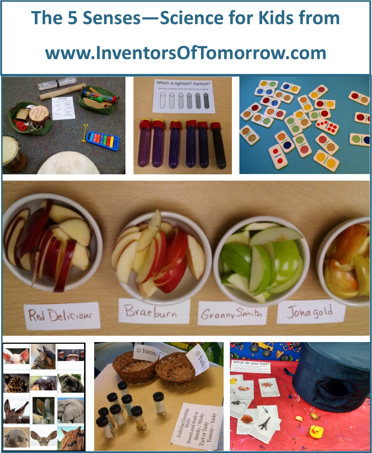The 5 Senses And Observation Inventors Of Tomorrow