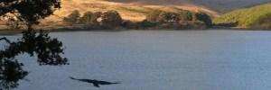 Inverness-Tomales Bay Hawk