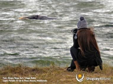 foto ballena2