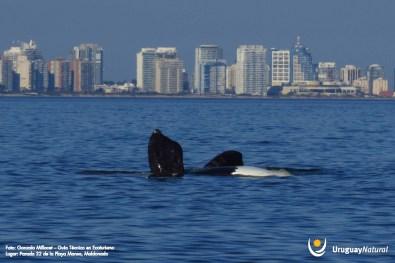 foto ballenas1