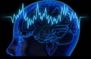 cerebro bolsa
