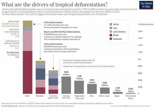 causas-de-la-desforestacion-en-el-mundo% - Causas de la desforestación y la necesidad de inversiones ESG