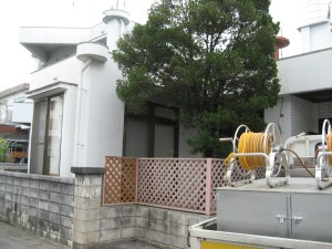taiger-house