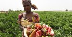 Adesina calls for immediate action over deepening crisis of global malnutrition