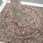 Toro+circular+tree+island+best+horz
