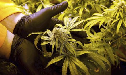 Experts debate expanded use of medical marijuana