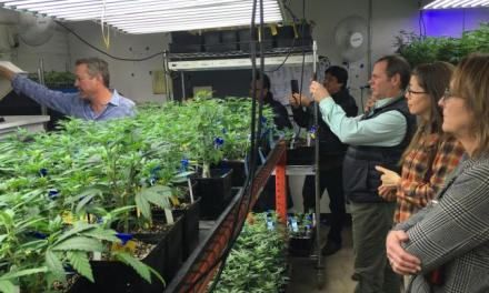 Weed 101: Colorado agriculture agency shares pot know-how