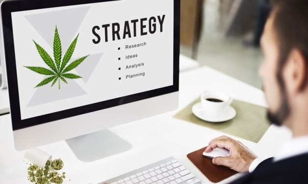 How to get a job in the marijuana industry right here in San Diego