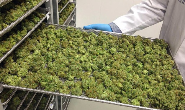 Universities, colleges offer more training for marijuana industry