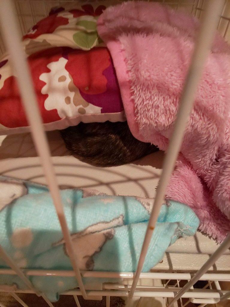 籠城する猫