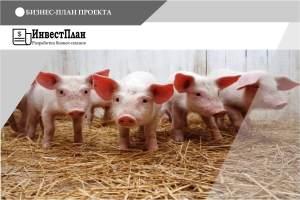 Бизнес-план по Созданию откормочной свиноводческой фермы