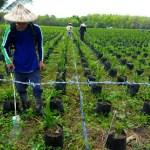 Mindanao aims to become palm oil hub