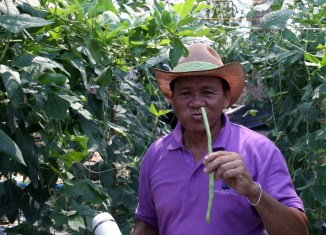 Thailand: New generation of farmers transform agriculture