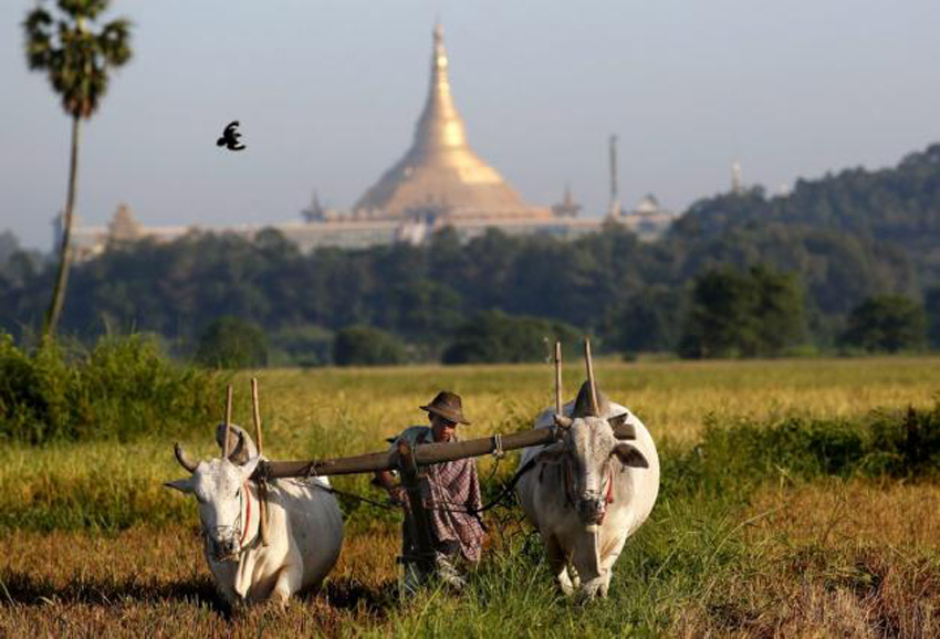 Myanmar growth slowed in election year: World Bank