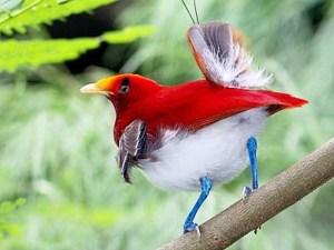Bird_of_Paradise_Wallpaper__yvt2