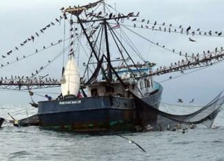 EU bans fish imports from Cambodia