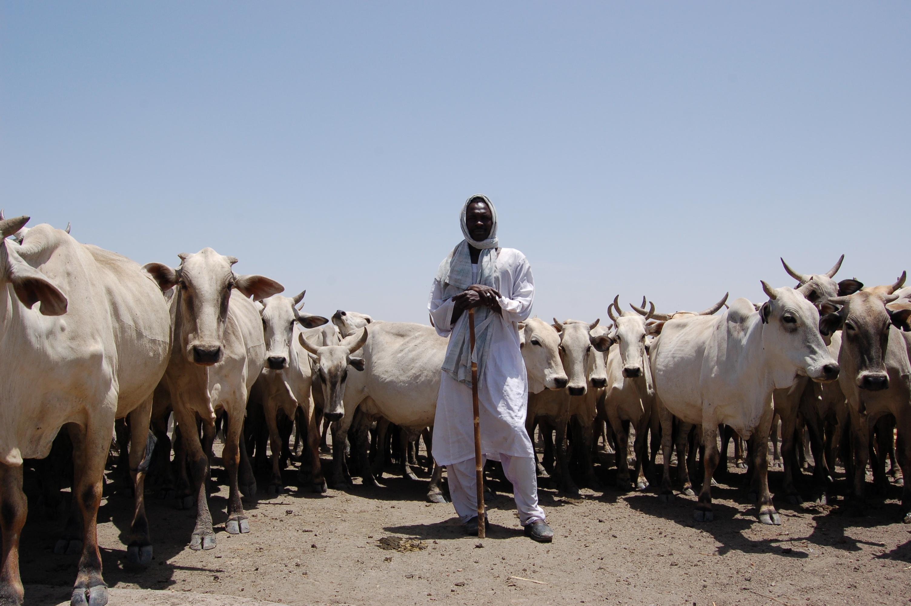 Farmer Harvesting Seeds Sudan 134570