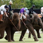 Elephant polo tournament kicked off in Thailand (video)