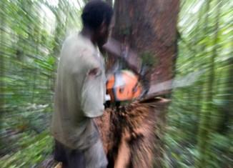 Illegal logging costs Indonesia $7b