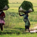 India overtakes Thailand to be Singapore's top rice supplier