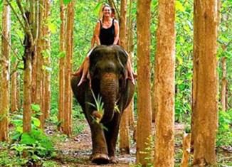 Laos-elephant