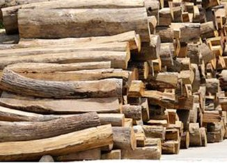 Myanmar ends raw wood export