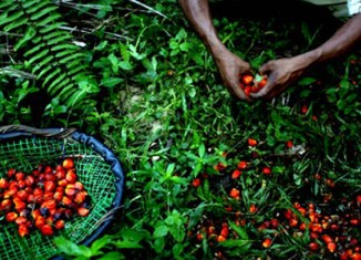Malaysia develops global standard to boost palm oil exports