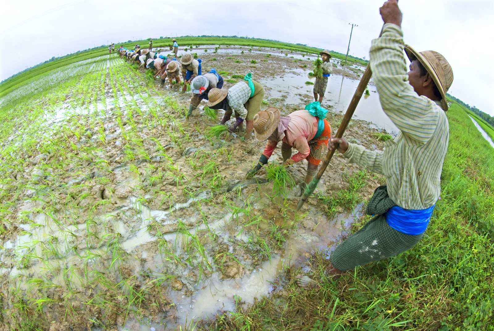 Philippine agri-land laws 'tragic': Senator